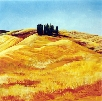 Cypress Pines in a Wheat Field near Pienza (Tuscany)