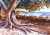 Morton Bay Fig, Thomson Bay